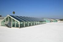 133. Rooftop