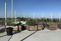 33. Rooftop