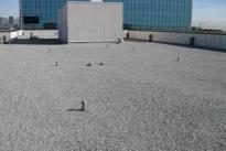 71. Rooftop